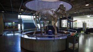 نتيجة بحث الصور عن متحف التاريخ الطبيعى فى جنيف اتش دى